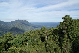 Dorrigo Rainforest